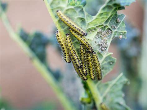 16 common garden pests hgtv