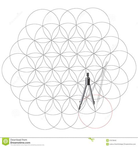 drawing compass draw  circles stock photography image