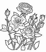 Rose Garden Drawing Coloring Pages Flower Worksheet Getdrawings sketch template