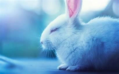 Bunnies Bunny Rabbit Ipad