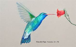 Color Pencil Drawing Hummingbird