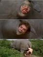 Ace Ventura pet detective! Rhino scene haha love it!   Ace ...