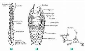Biochemistry  Major Groups Of Multicellular Animals