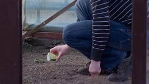 Gemüse Im Gewächshaus : der nutzgarten im m rz tipps tricks vom g rtner ~ Articles-book.com Haus und Dekorationen
