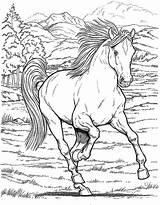 Horse Coloring Herd Printable Unique Getcolorings Sheet sketch template