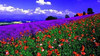 Field Spring Wallpapers Backgrounds Vast Flower Springtime