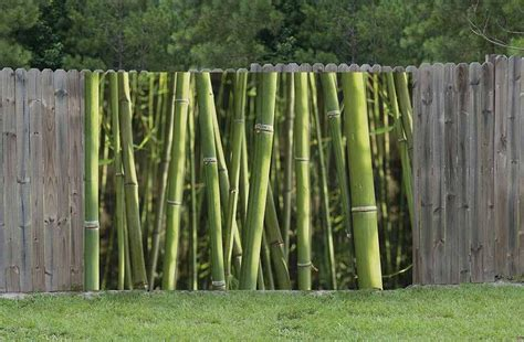 Paravent Bambou Exterieur #9