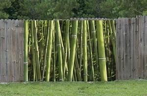 Bambou Pour Haie Brise Vue : brise vue bambou brise vue haut pour jardin prot g du ~ Premium-room.com Idées de Décoration