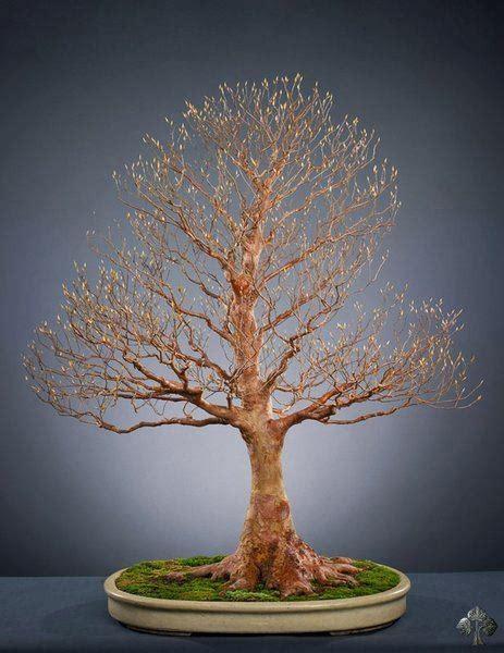 michael tran bonsai empire