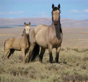 Pretty Wild Mustang Horse