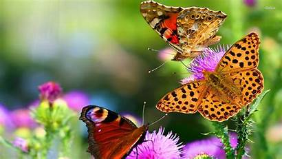 Butterfly Wallpapers Android Wallpapersafari Beatiful