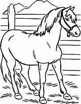 Horse Coloring Pages Printable Preschool Ausmalbilder Horses Pferde Simple Kindergarten Stallion Zum Ausdrucken Colouring Heifer Preschoolcrafts Kinder Malvorlagen Ausmalen Bilder sketch template