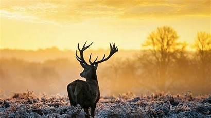 Wild Animals Deer Qhd Wallpapers 1080p Backgrounds