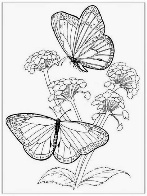 coloring pages  butterflies monarch  butterfly life cycle printable flowers