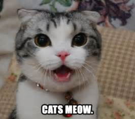 cat s meow m e o w test your might