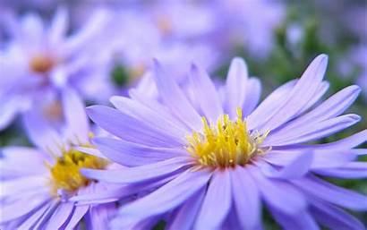 Pretty Flowers Wallpapers Violett 1050 1680 Flower