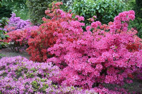 Japanischer Garten Nrw by Japanischer Garten Leverkusen Bl 252 Tenpracht Foto Bild