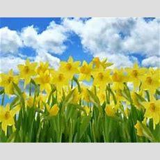 Spring Theme Activities And Printables For Preschool, Prek And Kindergarten Kidsparkz