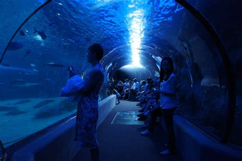 incredible underwater tunnel  hawaii