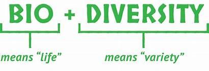 Biodiversity Meaning Levels Three Main Diversity Amnh