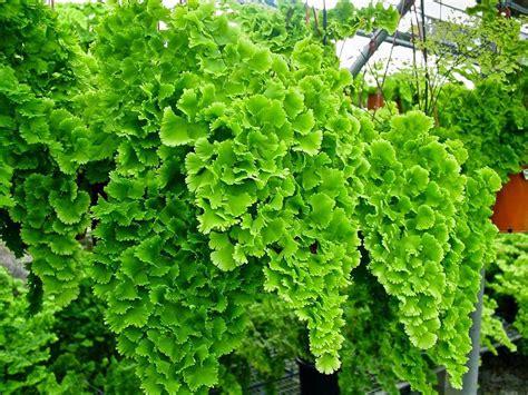 tanaman hias aneka macam tanaman hias  bisa kita pelajari