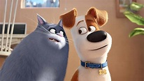 """Through the Reels: Movie Review: """"The Secret Life of Pets ..."""