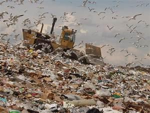 Seagull a.k.a. Dump Chicken - PentaxForums.com