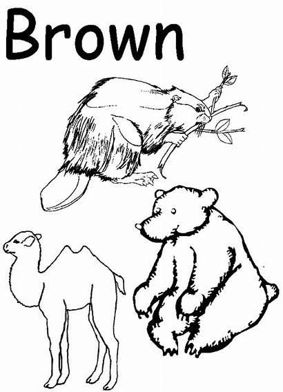 Preschool Coloring Worksheets Pages Brown Worksheet Activities
