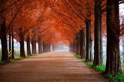Fall Foliage Places Bloomington Autumn Leaves Trees
