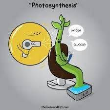 division for 5th graders 1000 images about sbi3c plants in the environment on photosynthesis jokes