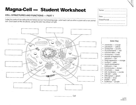 prokaryotic and eukaryotic cell worksheet photos dropwin
