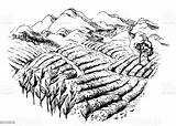 Plantation Tea Landscape Field Munnar Farm Agriculture Kerala Graphic Drawing Indien Agricultural Sketch Thee Drawn Botanique Plantations Paysage The Processing sketch template