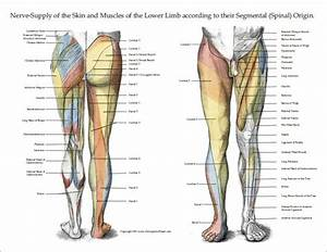 18 Best Upper Limb Images On Pinterest