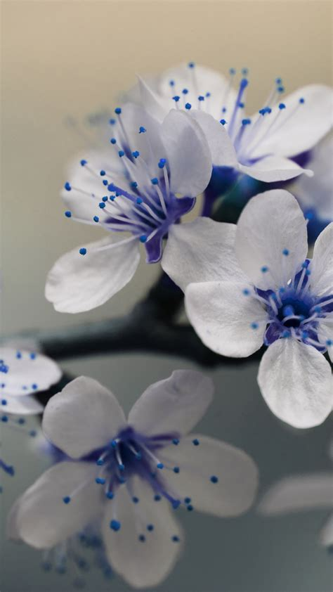 Free Hd Beautiful Blue Flowers Iphone Wallpaper For