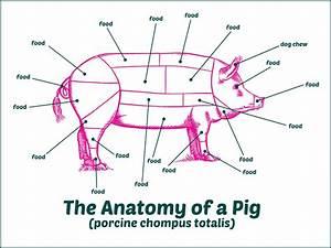 Anatomy Of A Pig The Poke