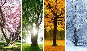 Kinnucan Tree Experts & Landscape Co 847-234-5327