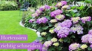 Hortensien Haltbar Machen : video hortensien mit glycerin haltbar machen plants growing flowers outdoor gardens garden ~ A.2002-acura-tl-radio.info Haus und Dekorationen