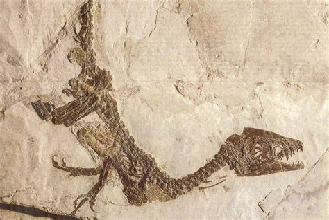 Scipionyx Samniticus.jpg