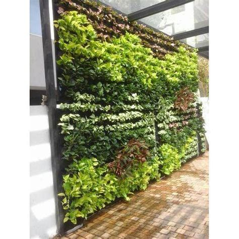 What Are Vertical Gardens by Wall Vertical Gardens Rs 975 Square Lifewall