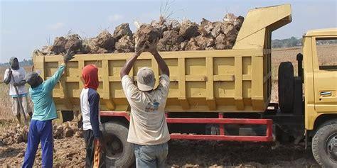 Jual Aborsi Jakarta Kekeringan Bongkahan Tanah Sawah Dijual Petani Untuk