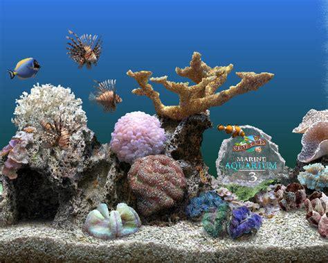 marine aquarium economiseur d 233 cran transformez votre 233 cran de pc en aquarium g 233 ant