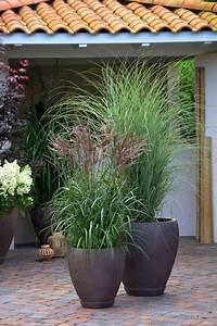 die 25 besten ideen zu kubelpflanzen winterhart auf With whirlpool garten mit balkon sichtschutz gras