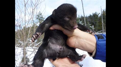 Photos Of Baby Bears Being Adorable