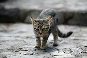 Was Brauchen Katzen : hunde und katzen petakids ~ Lizthompson.info Haus und Dekorationen