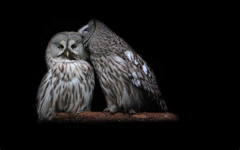Background Owl Wallpapers by Owl Hd Wallpaper Background Image 1920x1200 Id