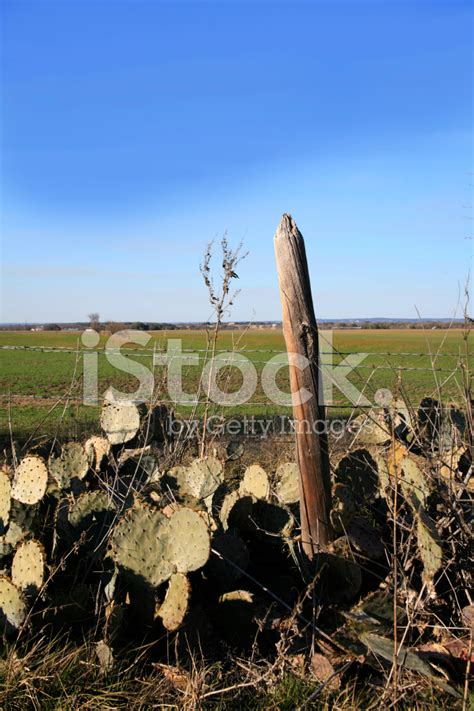 Cactus Plants Along A Fence Row Stock Photos