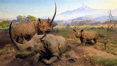 Natural York Nueva Museo Historia Xiquinhosilva