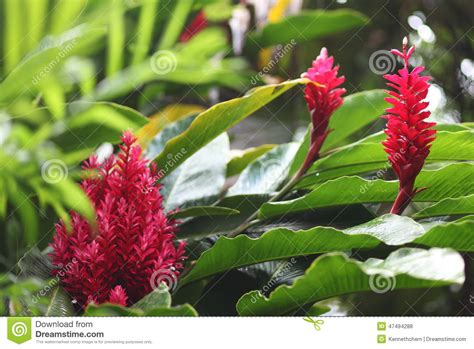 Exotic Plants In Caribbean Islands Stock Photo  Image Of