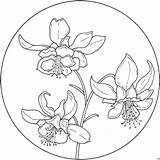Flower Coloring Circle Verzierung Orchideen Columbine Flowers Blumen Patterns Colorir Supercoloring Kolrosing Circulo Fiori Drawing Pattern Colorare Printable Colouring Stamps sketch template