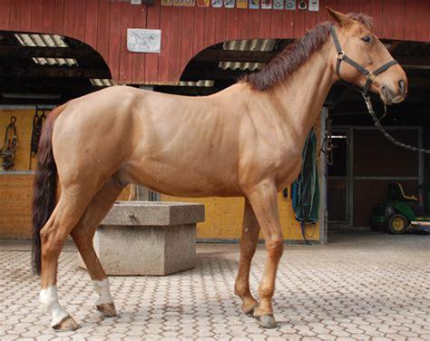 pferdepension stocker flaesch